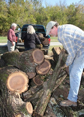 Felled trees slated for new purpose