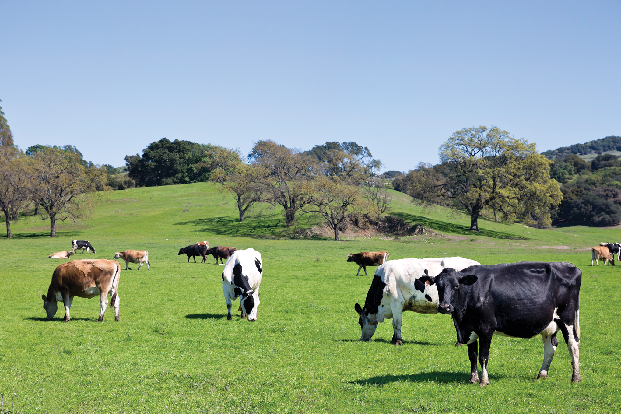 Get the most out of spring grazing