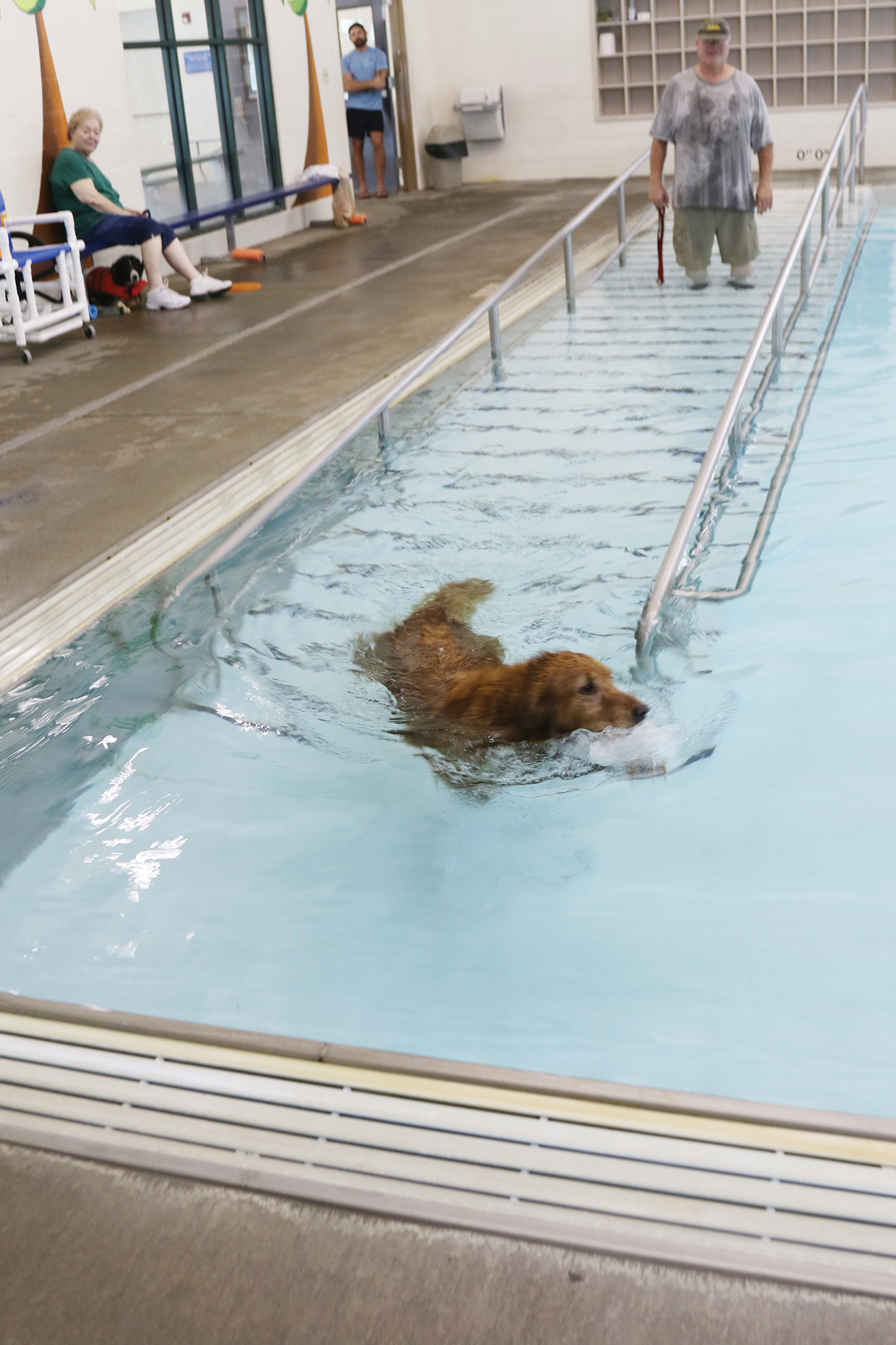 Canine swimmer